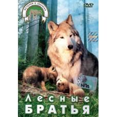 Лесные братья, истории о зверятах